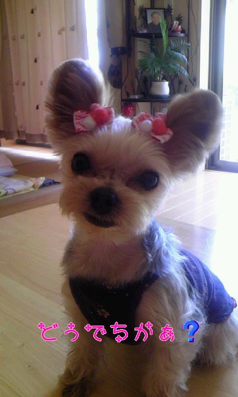 姫 ミッキーの耳2.jpg