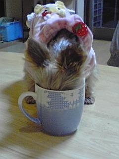 姫とコーヒーカップ.jpg