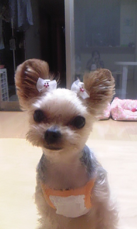 姫 ミッキーの耳.jpg