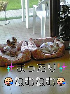 081016_1503~01.jpg